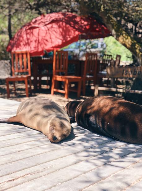 Presupuesto para un viaje a Galapagos
